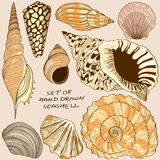 Set of isolated seashell icons Royalty Free Stock Image