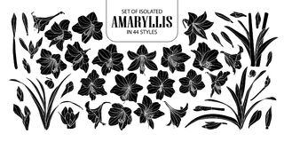 Set of isolated silhouette Amaryllis or Hippeastrum in 44 styles. Cute hand drawn flower vector illustration in white outline and. Black plane on black Royalty Free Stock Photography