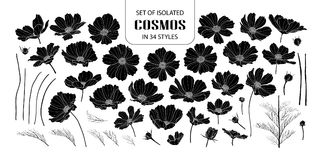 Set of isolated silhouette cosmos in 34 styles. Cute hand drawn flower vector illustration in white outline and black plane on white background Stock Photo