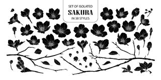Set of isolated silhouette sakura in 38 styles. Cute hand drawn flower vector illustration in white outline and black plane on white background Royalty Free Stock Photography