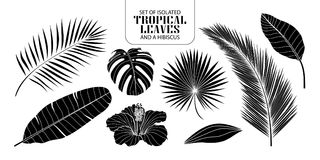 Set of isolated silhouette tropical leaves in 8 styles. Set of isolated silhouette tropical leaves in 8 styles and a hibiscus. Vector illustration of botanical Stock Photography