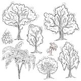 Set of isolated sketched trees Stock Image