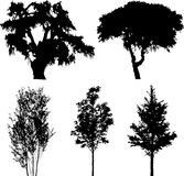 Set Isolated Trees - 14 Stock Images