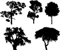 Set isolated trees - 15. Silhouettes. Silhouettes of  trees isolated on a white background Stock Photos