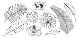 Set of isolated tropical leaves in 8 styles. Set of isolated tropical leaves in 8 styles and a hibiscus. Vector illustration of botanical in black outline and Stock Image
