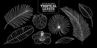 Set of isolated tropical leaves in 8 styles. Set of isolated tropical leaves in 8 styles and a hibiscus. Vector illustration of botanical only white outline on Stock Photos