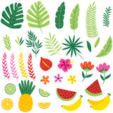 Set of isolated with tropical plants and fruits Royalty Free Stock Photo