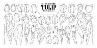 Set of isolated Tulip in 30 styles. Cute hand drawn flower vector illustration in black outline and white plane. royalty free illustration