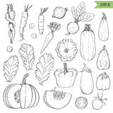 Set of isolated vegetables in a sketch style. Carrots, lettuce, zucchini, eggplant, pumpkin, beets, squash Royalty Free Stock Photos