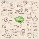 Set of isolated vegetables in a sketch style. Pepper, tomato, cucumber, peppers, onions, garlic, peas and beans Royalty Free Stock Photography