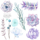 Set with the isolated watercolor floral elements: succulents, flowers, leaves and branches, hand drawn on a white background Royalty Free Stock Image