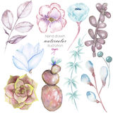 Set with the isolated watercolor floral elements: succulents, flowers, leaves and branches, hand drawn on a white background Royalty Free Stock Photos