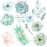 Set with the isolated watercolor floral elements: succulents, flowers, leaves and branches, hand drawn on a white background Stock Photos