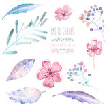 Set with isolated watercolor floral elements: tender flowers and leaves in pastel shades, hand drawn on a white background Royalty Free Stock Photos
