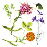 Set with isolated watercolor wild flowers. stock illustration