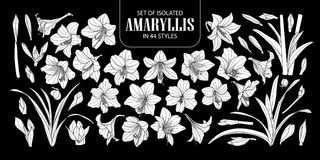 Set of isolated white silhouette Amaryllis or Hippeastrum in 44 styles. Cute hand drawn flower vector illustration in white plane. And no outline on black Stock Photos