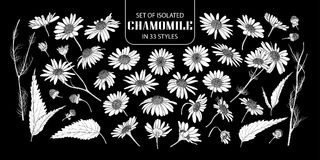 Set of isolated white silhouette chamomile in 33 styles. Royalty Free Stock Photo