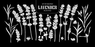 Set of isolated white silhouette Lavender in 20 styles. Cute han Royalty Free Stock Images