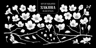 Set of isolated white silhouette sakura in 38 styles. Cute hand drawn flower vector illustration in white plane without outline on black background Royalty Free Stock Images