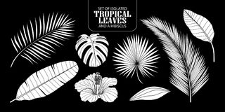 Set of isolated white silhouette tropical leaves in 8 styles. Set of isolated white silhouette tropical leaves in 8 styles and a hibiscus. Vector illustration Stock Images