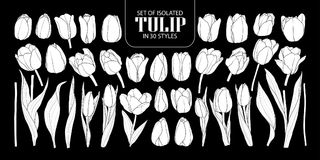 Set of isolated white silhouette Tulip in 30 styles. Cute hand d Stock Photos