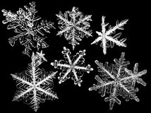 Snowflakes. Set of isolated white snowflakes at black background Royalty Free Stock Photo
