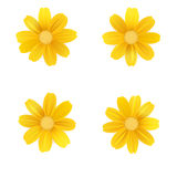Set of isolated yellow gerbera or daisy. Vector colorful flowers on white background. Template for for t-shirt, fashion Stock Photos