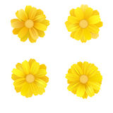 Set of isolated yellow gerbera or daisy. Vector colorful flowers on white background. Template for for t-shirt, fashion Royalty Free Stock Photo