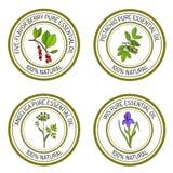 Set istotny olej przylepia etykietkę arcydzięgiel, irys, pistacja, jagoda ilustracja wektor