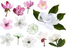 Set jabłczanych i czereśniowych drzew okwitnięcie odizolowywający na bielu Zdjęcie Stock