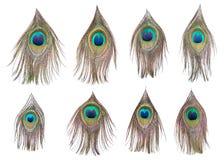 Set jaskrawi dividual pawi piórka Obraz Royalty Free