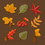 Set jesień kolorowi liść wektor Obrazy Royalty Free
