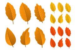 Set jesień liść Royalty Ilustracja