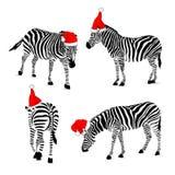 Set jest ubranym Santa kapelusz zebra Obrazy Stock