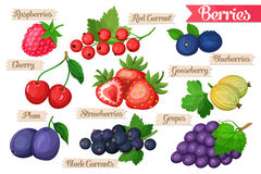 Set of juicy berries. Icons of juicy ripe bright  drawn berries Royalty Free Stock Photography