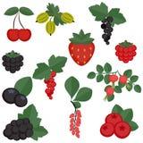 Set of juicy berries. Royalty Free Stock Images