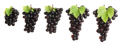 Set with juicy ripe grapes. On white background royalty free stock photo