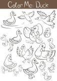 Set kaczki i kaczątka Obraz Stock