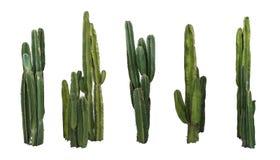 Set kaktusowe real rośliny odizolowywać na białym tle zdjęcie royalty free