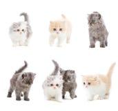 Set Katzen lizenzfreie stockfotos