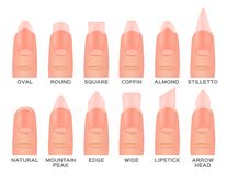 Set kinds of nails. nail shapes and type. On white background Royalty Free Stock Photos