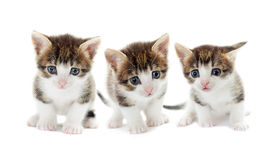 Set of kittens Royalty Free Stock Images