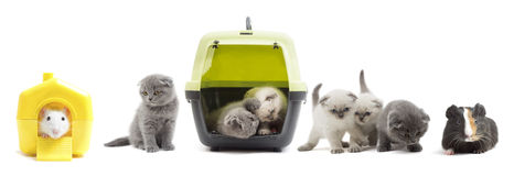 Set of kittens. On a white background Stock Photography