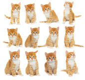 Set of kittens Stock Images