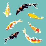 Set of koi fish, carp fish collection, vector Royalty Free Stock Photo