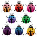 Set kolorowa Ladybag ikona odizolowywająca na tle Dziki ladybird, ściga Płaska ilustracja ilustracja wektor