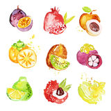 Set kolorowe akwareli owoc wektoru ilustracje royalty ilustracja