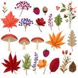 Set kolorowi jesień liście pieczarka i jagody Odizolowywający dalej royalty ilustracja
