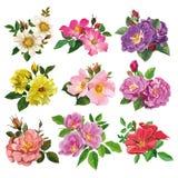Set kolorowi kwiaty dziki wzrastał Zdjęcia Stock