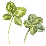 Set koniczyna liście i koniczyna - leafed beak dekoracyjnego latającego ilustracyjnego wizerunek swój papierowa kawałka dymówki a Zdjęcia Stock